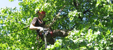Puidenhoito on pääasiassa huomaamatonta käsityötä. Arboristi kiipeilee hoitoleikkuupuuhissa köysien ja valjaiden avulla ja käyttää erikoiskäsisahoja ja saksia. Moottorivoimaan turvaudutaan vain kaatotöissä.