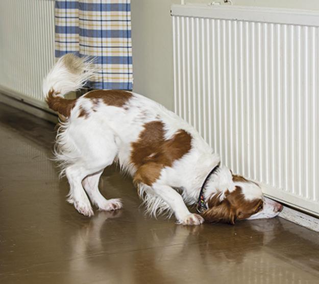Homekoiratutkimus on helppo ja nopea menetelmä kosteus- ja homevaurioiden toteamiseen. Koulutettu koira löytää tarkan hajuaistinsa avulla vauriokohdat, eikä rakenteita tarvitse tarkastusta varten purkaa.